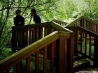 Arborescence - Episode 5